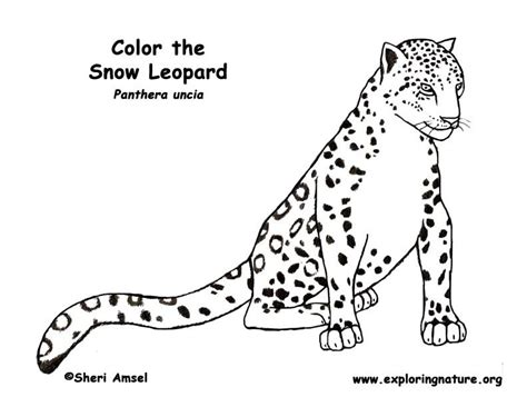 baby snow leopard coloring pages coloring pages