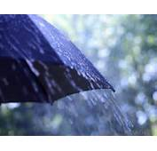 What Should I Consider When Buying An Umbrella With