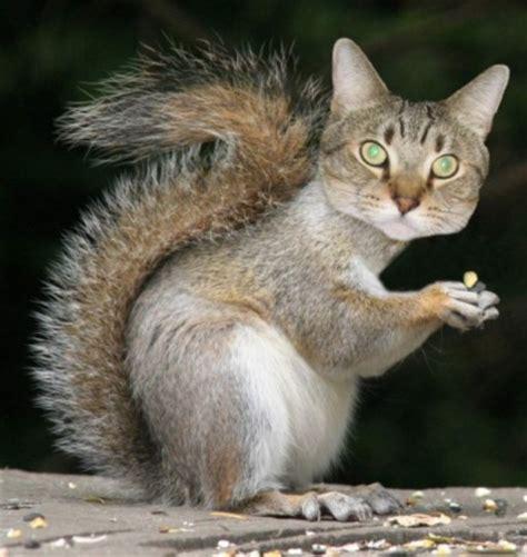half cat half squirrats carrels half cat half squirrel squirrelol