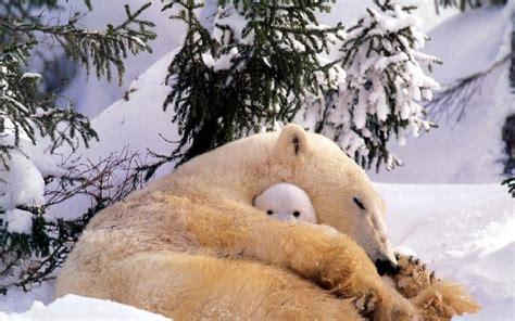 Süße Baby Tiere 5015 by Die 73 Besten S 252 223 E Tierbabys Hintergrundbilder