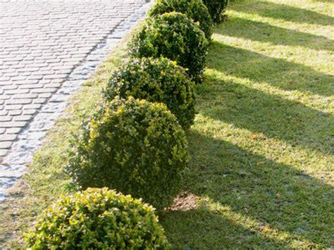Arbuste En Pot Pour Terrasse 7984 by Arbres Et Arbustes Archives Les Sols Isabelle