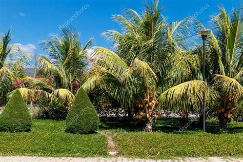 giardini con palme giardino con palme e cipressi foto stock 169 riderfoot