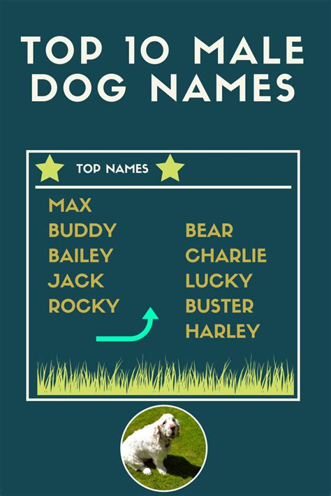 top 10 most popular dog names top ten boy names driverlayer search engine