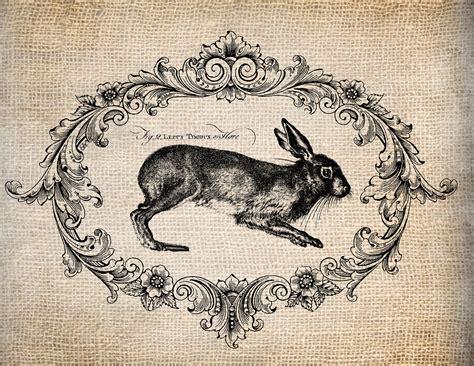 vintage illustration antique french rabbit le lapin script easter illustration