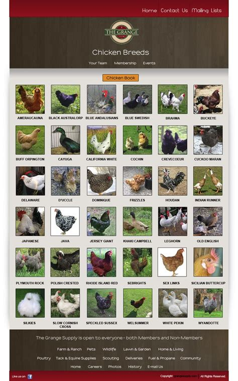 p breeds chicken breeds chicken breeds