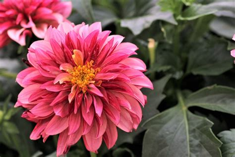 pretty color combinations pretty color combination pentaxforums