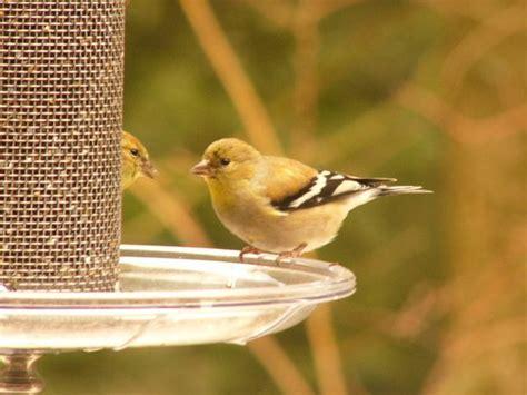 why i feed birds in the summer the zen birdfeeder