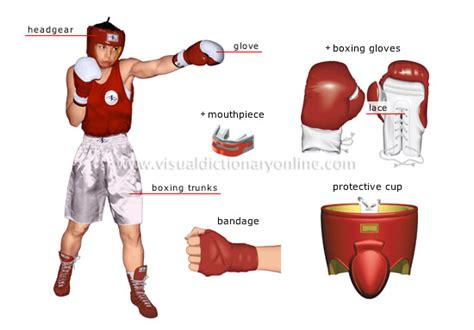 boxer weight sports combat sports boxing boxer image visual dictionary