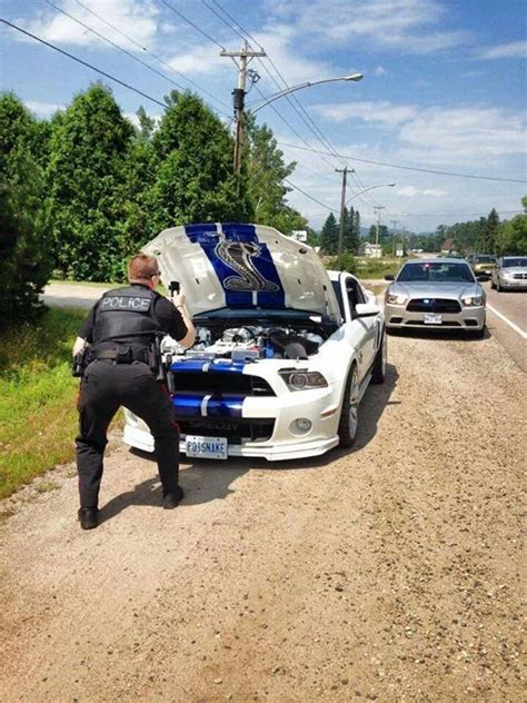 Mustang Auto Spr Che by Ford Mustang Shelby Gt 500 Pulled Over Police Officer