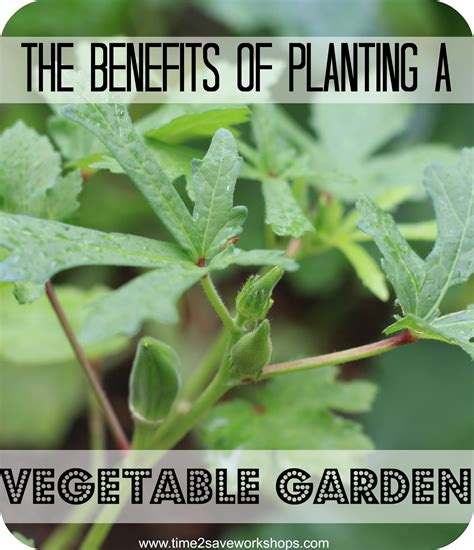 The Benefits Of Vegetable Gardens Why Grow A Vegetable Benefits Of Vegetable Gardening