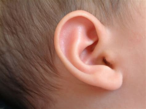 ear infection picture ear infections pictures posters news and on your pursuit hobbies