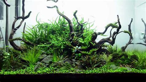 aquascape maintenance 90cm aquascape maintenance and 1 month update aqueous