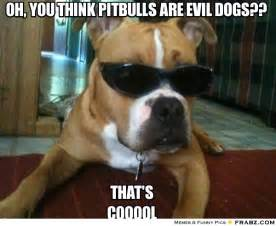 Memes About Dogs - evil dog meme bing images