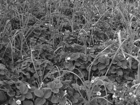 Pflanzen Im Garten 2567 by Gt Gt Mehr Lesen
