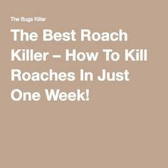 best roach killer the 25 best killing roaches ideas on roach