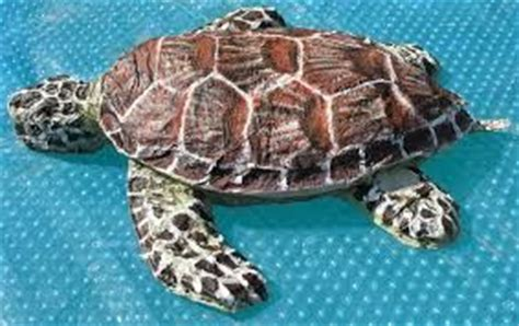 How To Make A Paper Mache Turtle - how to make a paper mache turtle search
