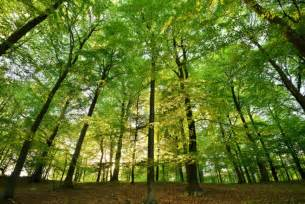 trees save lives reduce respiratory problems sciencedaily