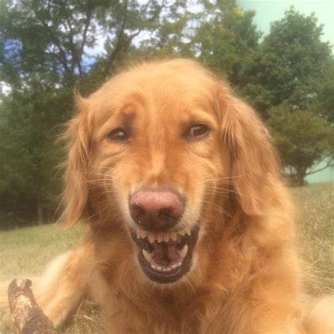 do dogs laugh pictures so we you not to laugh