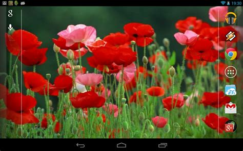 google images poppies red poppies 3d wallpaper android apps on google play