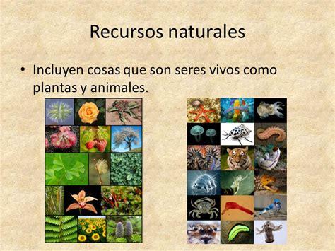 imagenes de recursos naturales vivos natural contra artificial y 191 c 243 mo sabemos qu 233 reciclar