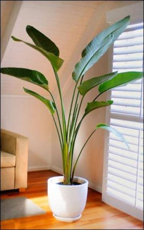 modern houseplants appealing indoor plants with ceramic flower pot modern of