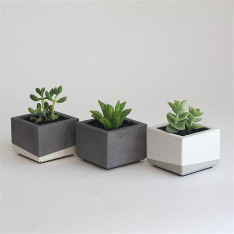 mini succulent planters set of three mini concrete succulent planters by