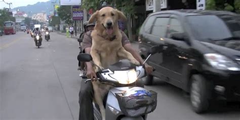 dogs on the dogs on hogs rebel pups take summer motorcycle rides huffpost