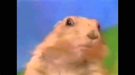 Dramatic Squirrel Meme - dramatic squirrel related keywords dramatic squirrel
