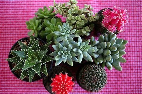 cactus and succulent gift ideas eighteen25