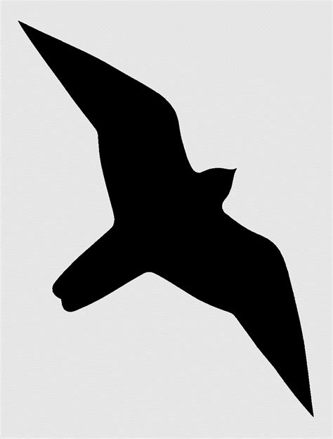 image silhouette peregrine falcon recovery project