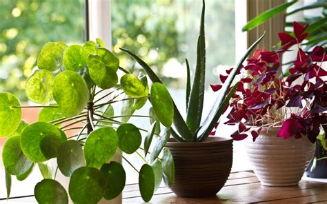 plants for apartments best plants for apartment living