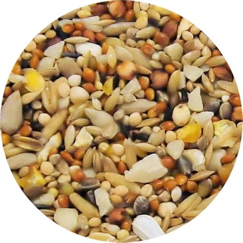 birdseed black oil sunflower seeds wild birdseed