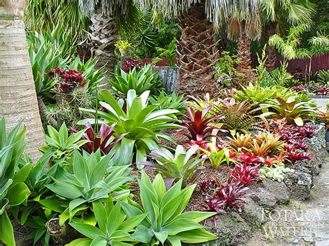 subtropical garden ideas totara waters sub tropical garden garden stay accommodation