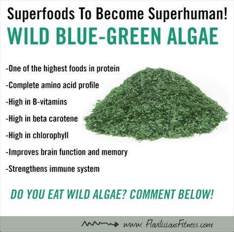 Blue Green Algae Detox Diet by Food Friday Why Is Blue Green Algae A Superfood