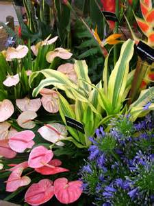 Tropical Garden Flowers Tropical Plants Image Search Results