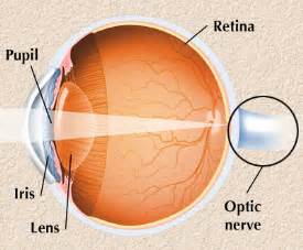 definition of blind spot in the eye interactive health eye anatomy