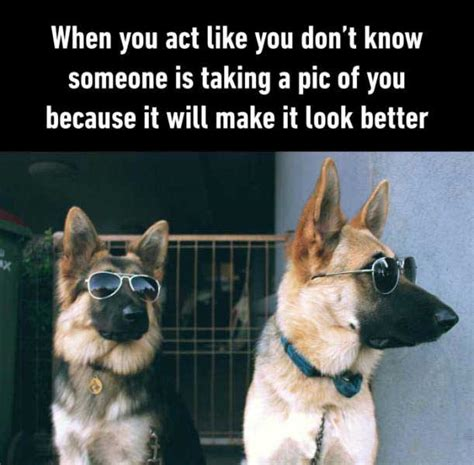Dog With Glasses Meme - it s time for your wednesday wtf photos gallery