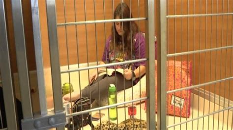 volunteers spend  hours locked  kennel cages