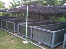 backyard catfish farming  easy classes  courses