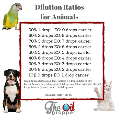 calming essential oils for dogs essential oils for your dogs the dropper