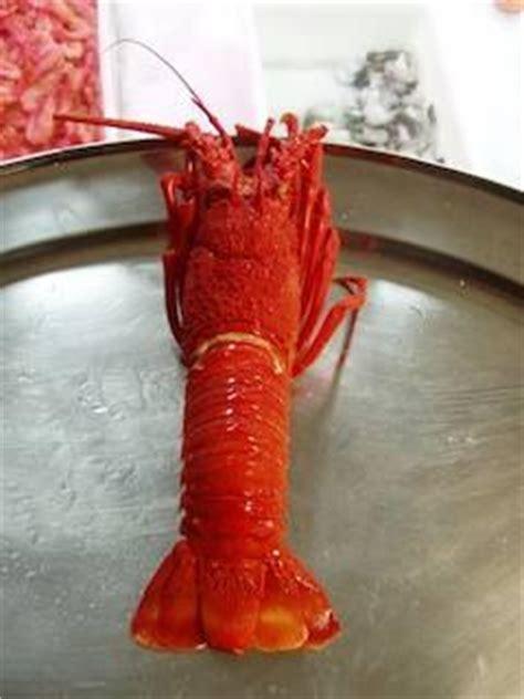 come cucinare aragosta congelata cottura a vapore lobster condividilo afpilot