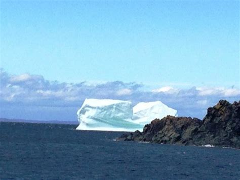 iceberg quest boat tours iceberg beer picture of iceberg quest ocean tours