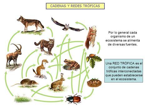 que son cadenas y redes troficas el conjunto de cadenas alimentarias lesbos