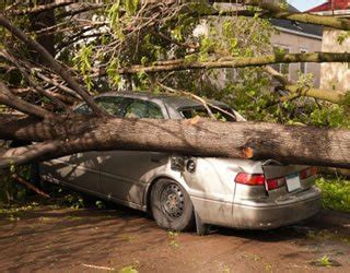 home insurance and fallen trees chain saw massacre insurance for downed trees