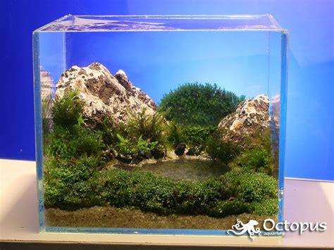 aquascape plants list slobodan lazarevic mountain lake