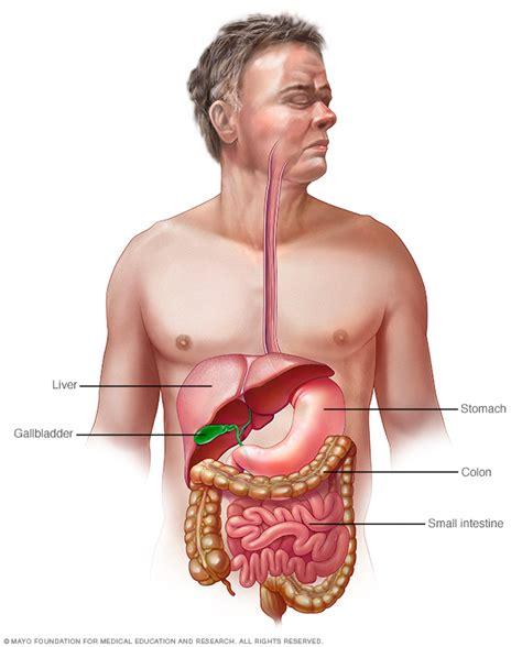 gastrointestinal food gastrointestinal tract mayo clinic