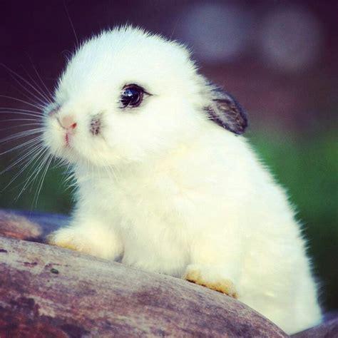 fotos animales lindos conejo tierno conejitos tiernos pinterest