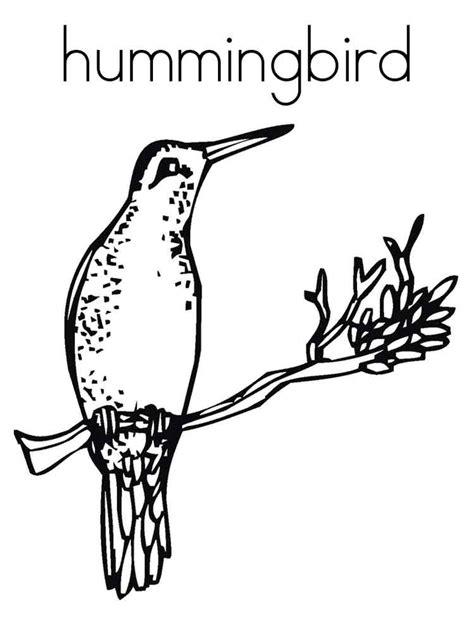 hummingbird coloring page hummingbird coloring pages download and print hummingbird