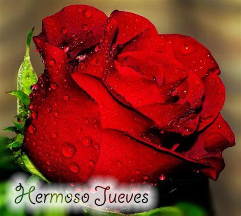 feliz jueves con rosas jpg feliz jueves gifs animados buscar con google gifs