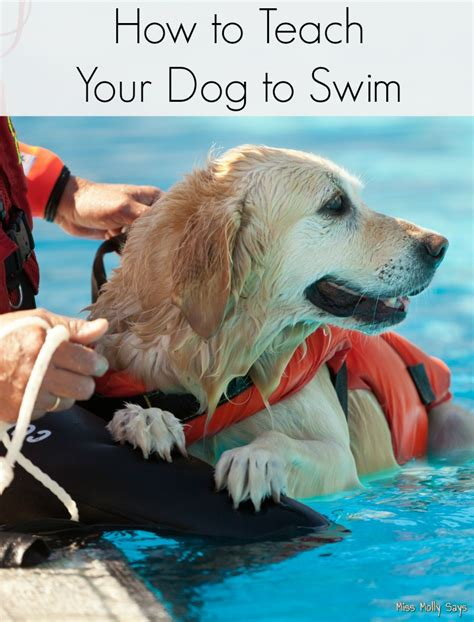 how to teach a to swim how to teach your to swim miss molly says